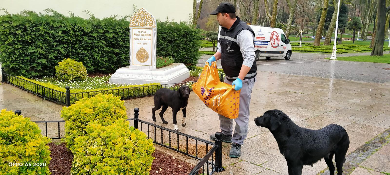 İstanbul Büyükşehir Belediyesi ekipleri mama dağıtırken